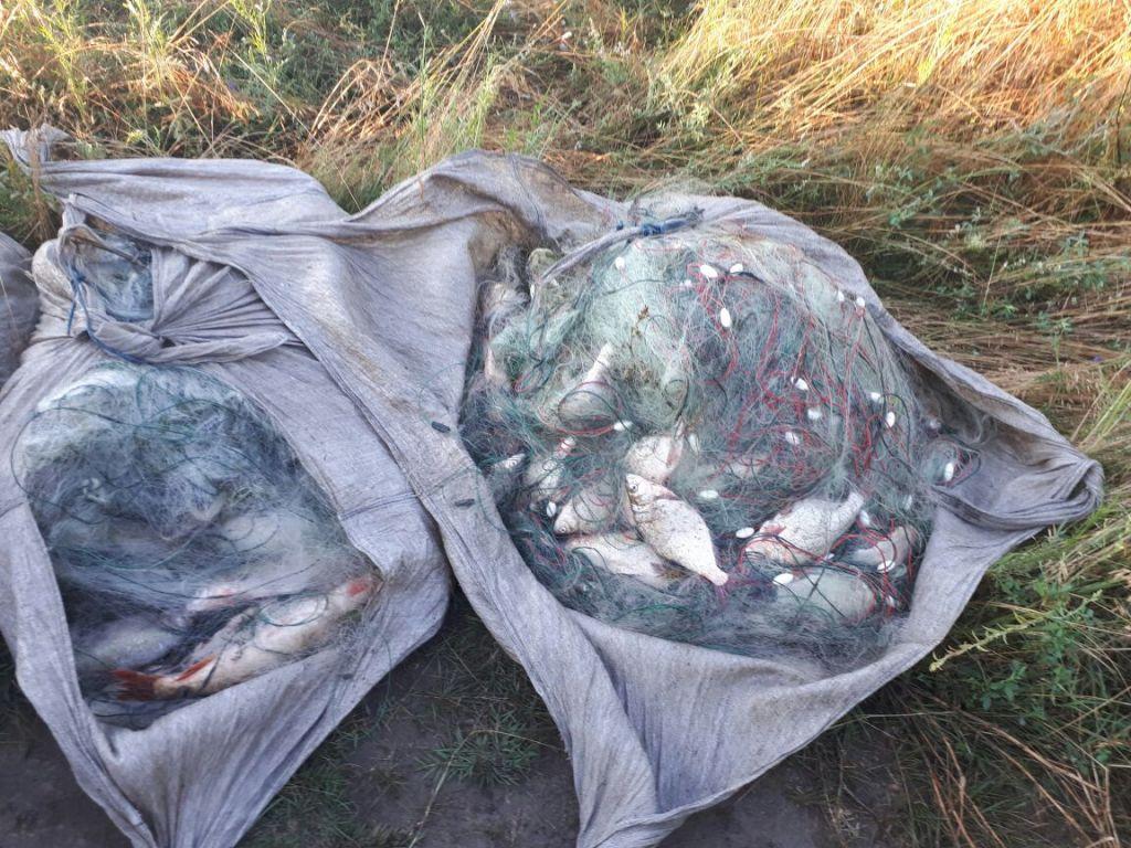 В алматинской области задержаны браконьеры, глушившие рыбу электротоком