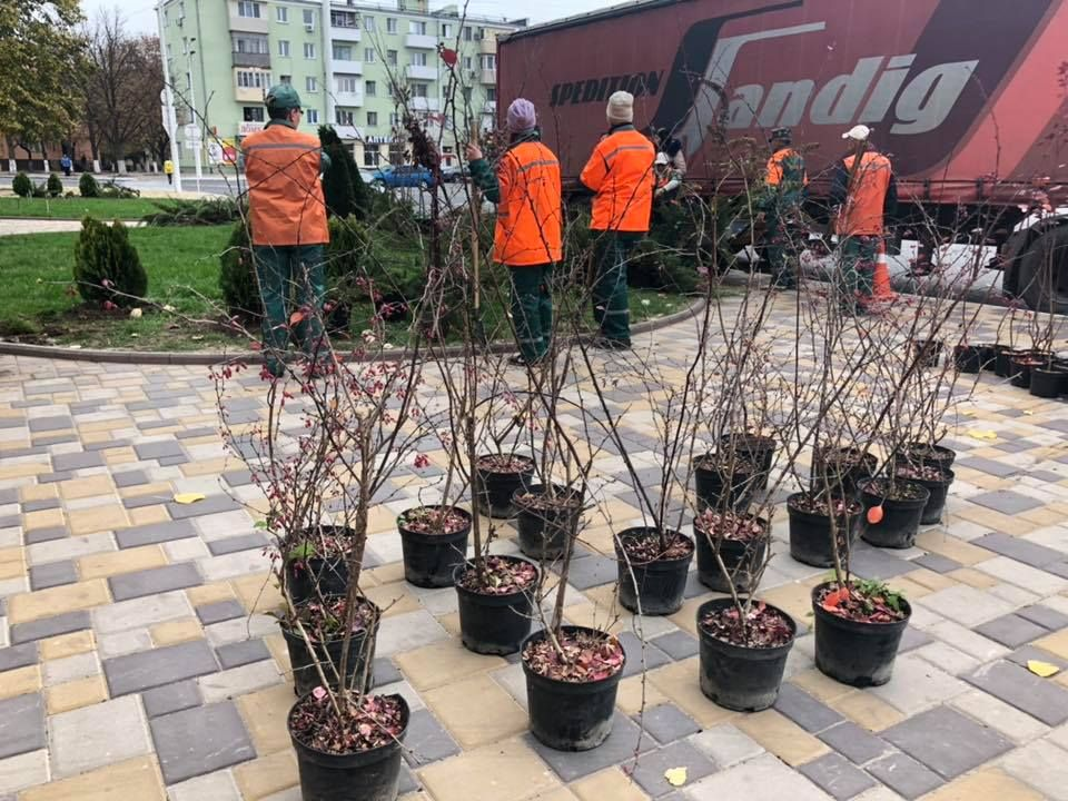 В Измаиле стартовал осенний этап высадки деревьев: в ноябре будет высажено более тысячи саженцев (ФОТО, ВИДЕО)