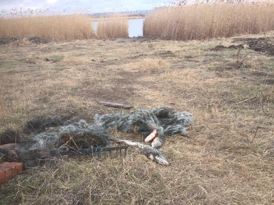 В Измаильском районе на озере Сафьян задержали местную жительницу, промышлявшую браконьерством  (ФОТО)