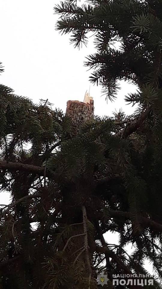 Варварская романтика: 23-летний парень признался, что спилил верхушку ели на Южном и подарил любимой девушке (ФОТО)