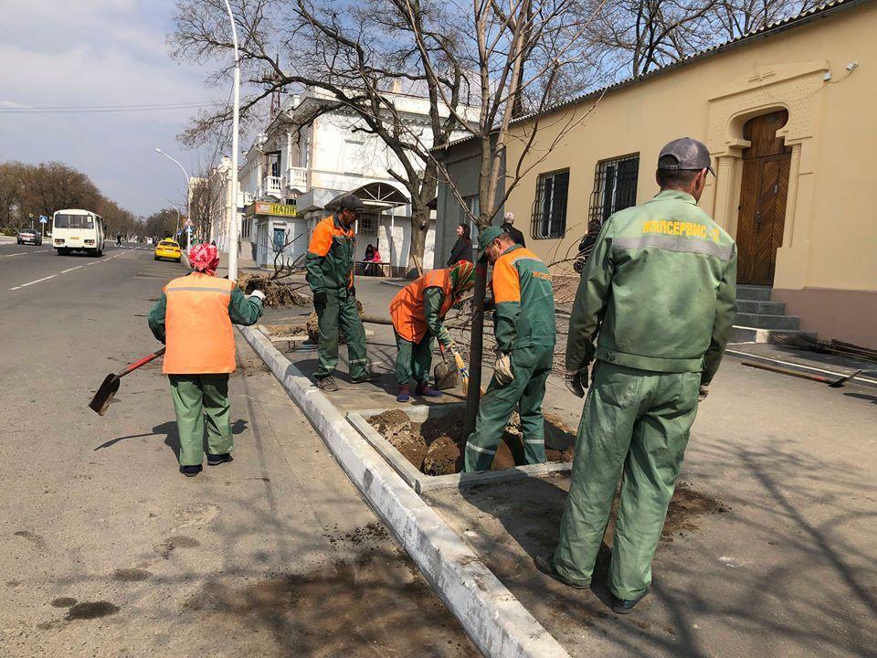 В Измаиле продолжается весенняя высадка деревьев (ФОТО)
